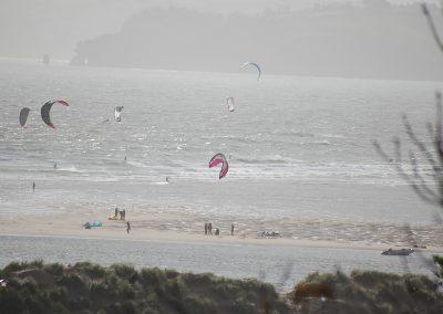 Kites-in-Devon